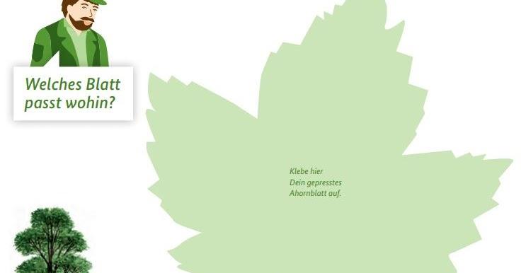 sch lerclub dornbirn sachwissen ein blattalbum herbarium. Black Bedroom Furniture Sets. Home Design Ideas