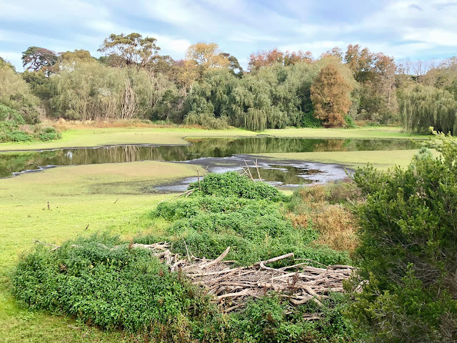 Coolart Homestead, Somers wetlands