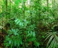 Natural Resource Overexploitation Definition