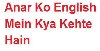 अनार को इंग्लिश में क्या कहते हैं | Anar Ko English Mein Kya Kehte Hain