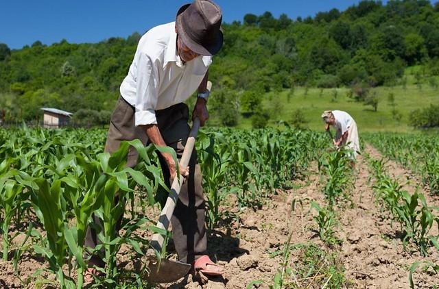 Agricultores familiares de Malhada de Pedras, Rio do Antônio, Lagoa Real e Guajeru receberão benefícios do Governo para cobrir perdas com a seca