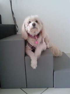 cães com lesão cerebral