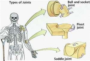 Human skeleton diagram stock image. Image of humerus ...  Human Skeleton Joints Diagram