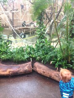 Das Kind ist im Affenhaus des Kölner Zoos völlig fasziniert von seinen neuen Freunden