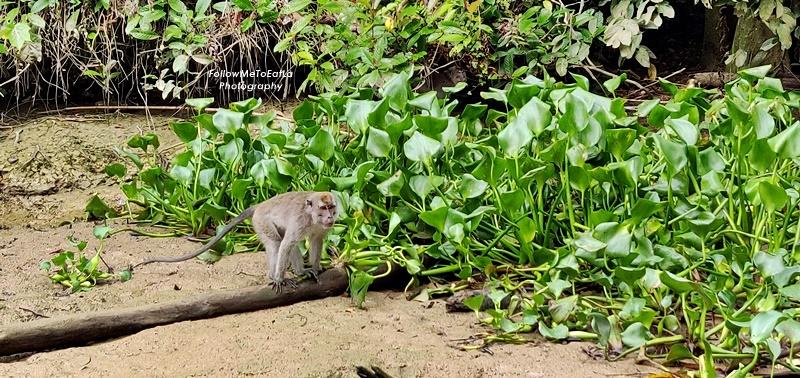 Myne Resort Bilit - Morning Cruise - Long Tail Macaques