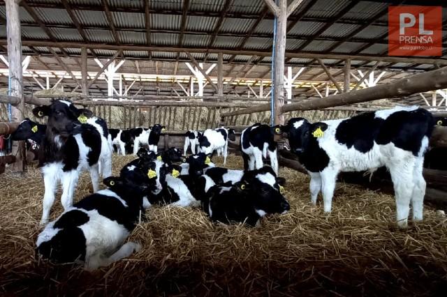 SAG Los Lagos lanza aplicación móvil para ganaderos
