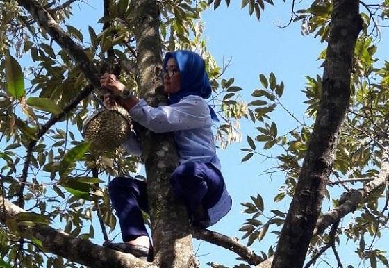 Viral! Video Bupati Lebak Iti Octavia Jayabaya Panjat Pohon Durian