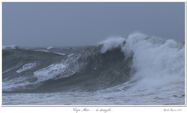 Cape Ann: ... in strength...
