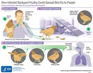 H5N8 bird flu in humans