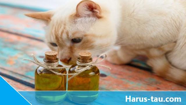Minyak Tawon Untuk Kucing Jamuran