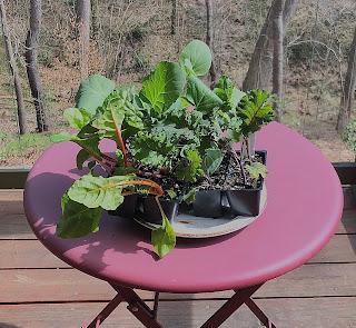 https://placesofthespirit.blogspot.com/2020/03/veggie-transplants-ready-to-go.html