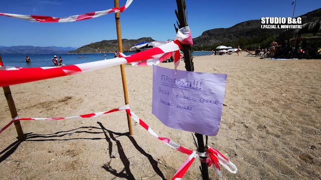 Θαλάσσια χελώνα Caretta caretta γέννησε τα αυγά της σε παραλία στο Ναύπλιο (βίντεο)