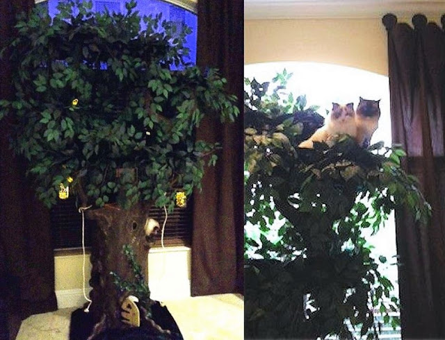 Tall Cat Trees