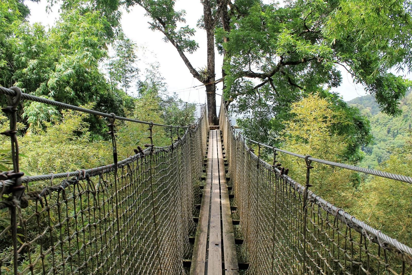 jardin de balata martinique pont suspendue parcours