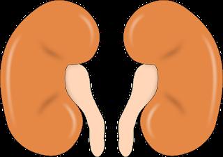 Gagal Ginjal - Pengertian, Gejala, Penyebab, dan Cara Mengobati