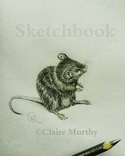 mouse sketch