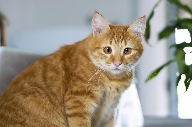 Como adaptar um novo animal em casa