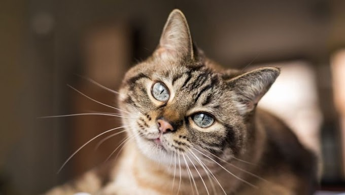 A Cat In Belgium Tested Positive For COVID-19