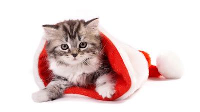Grijs witte kat in kerstmuts