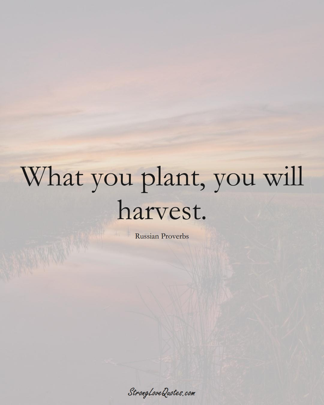 What you plant, you will harvest. (Russian Sayings);  #AsianSayings