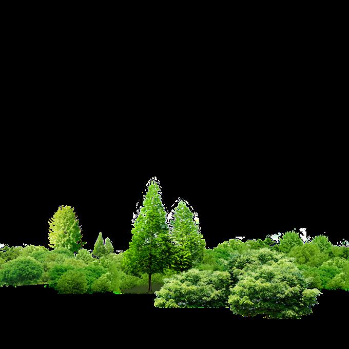 plantas de hoja verde, árbol de economía de Tailandia suficiencia, árbol, comida, hoja png by: pngkh.com