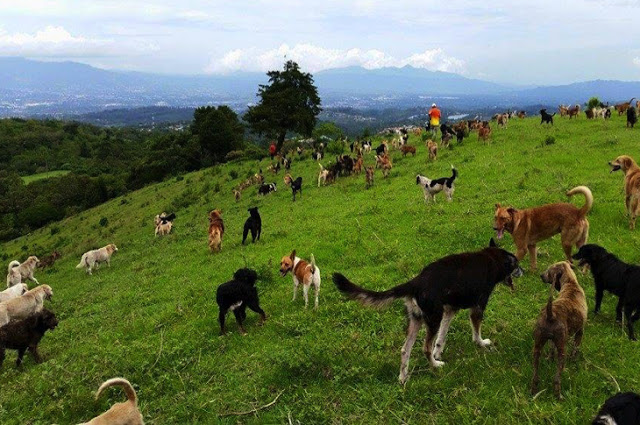 """Land Of The Strays"" Is The Shelter Every Dog-lover Has Been Dreaming Of With 900 Free-roaming Happy Pups"