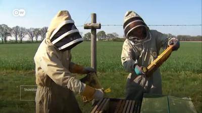 pemanenan lebah madu oleh peternak lebah madu