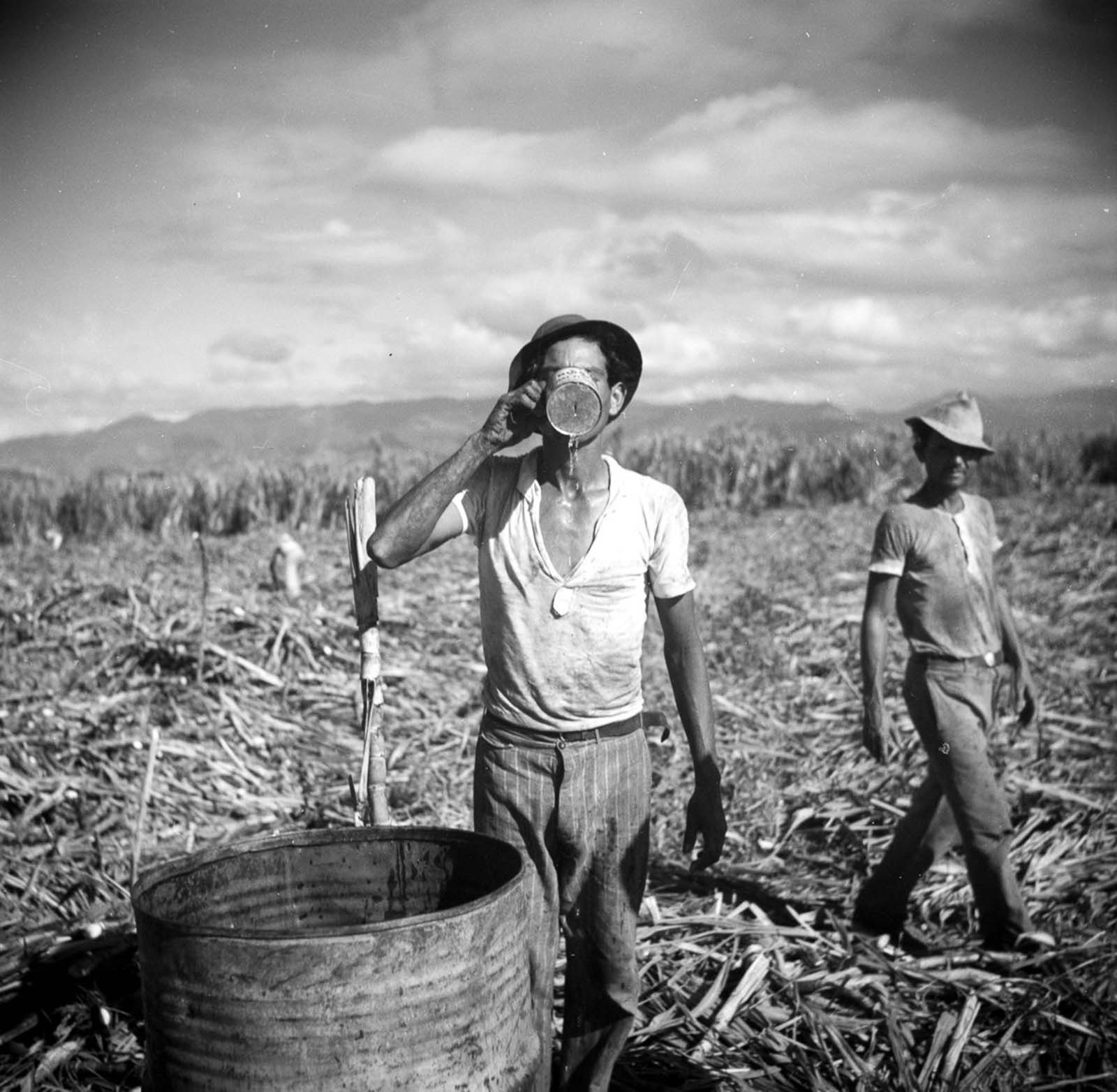 A worker on a sugar plantation takes a drink of water.