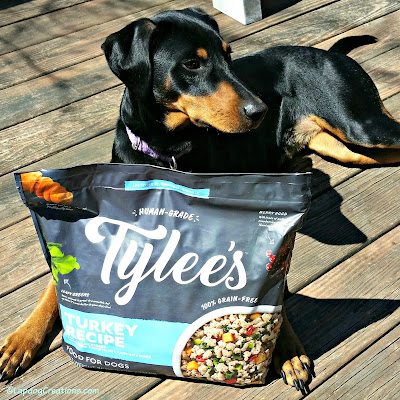 doberman mix dog with tylees frozen food
