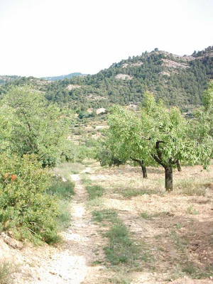 La pileta, camino, pantano de Pena, embalse, finca, almendros, olivos 20