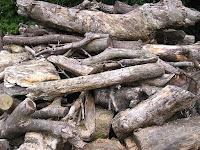 切られた庭木