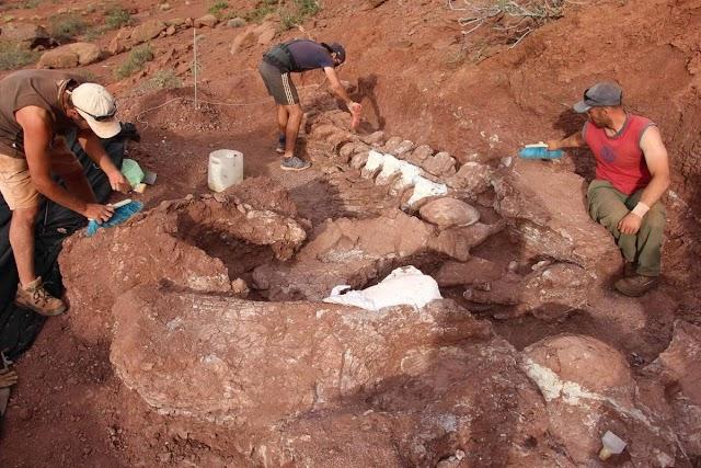 Los fósiles de dinosaurios encontrados en Argentina podrían pertenecer a la criatura más grande del mundo