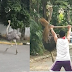 Ostrich spotted running in the middle of the road in QC steal the internet's attention