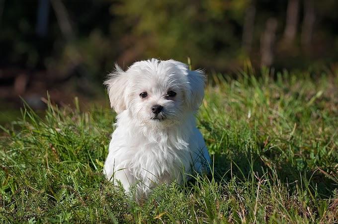 ¿Cuándo es bueno adoptar un cachorro?