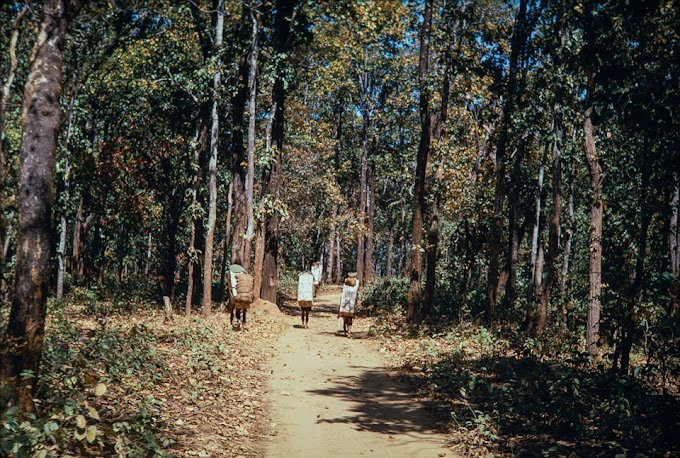 Somewhere in the Jungle of Bharatpur, Chitwan during 1970