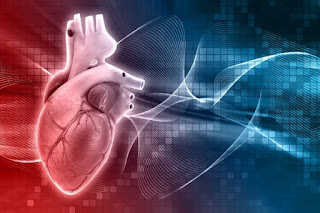 Organ jantung Manusia