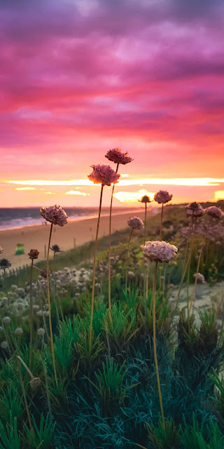 Bầu trời hoàng hôn đầy sắc màu