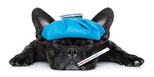 la gripe de los perros