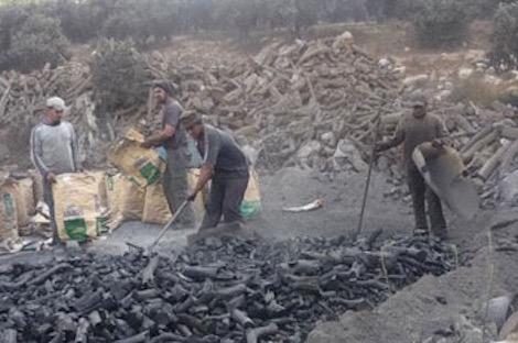 """أضرار """"المفاحم العشوائية"""" تنذر باحتقان اجتماعي بإقليم تارودانت"""