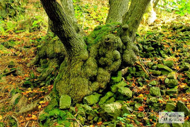 Połączone drzewa