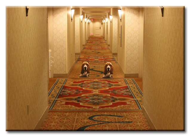 Bentley Basset hound poses for a scene from the Shining