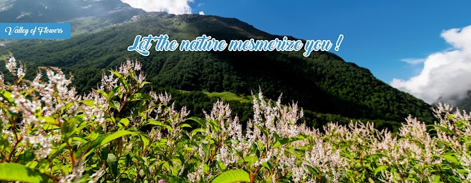 How to Reach Valley of Flowers - Complete Travel Guide