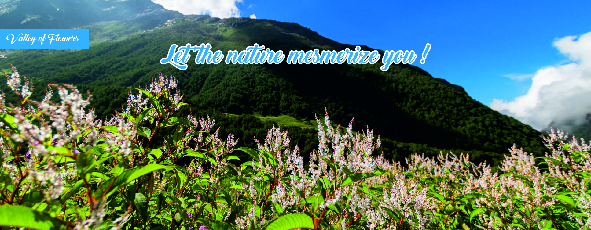 valley of flowers - tourist places in chamoli