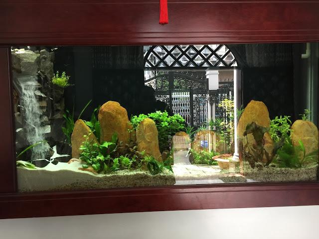 Kỹ thuật trồng cây thủy sinh tốt nhất để bể cá đẹp nhất