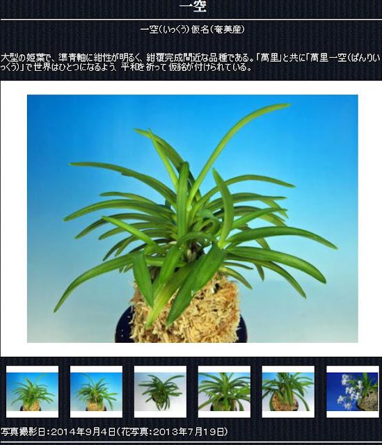 http://www.fuuran.jp/jiman_ikkuu.html