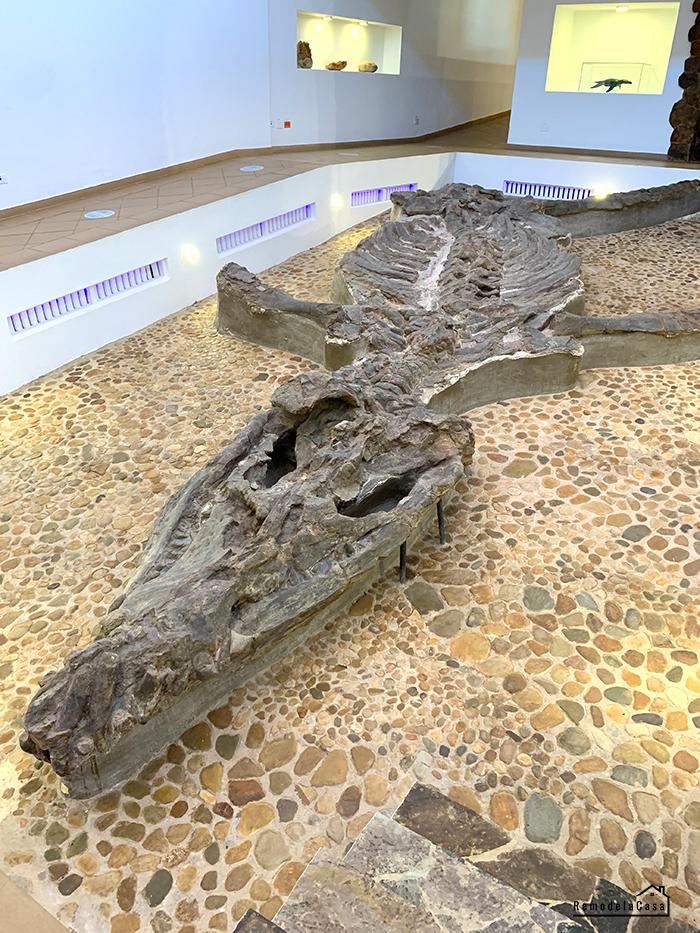 Kronosaurus Boyacencis