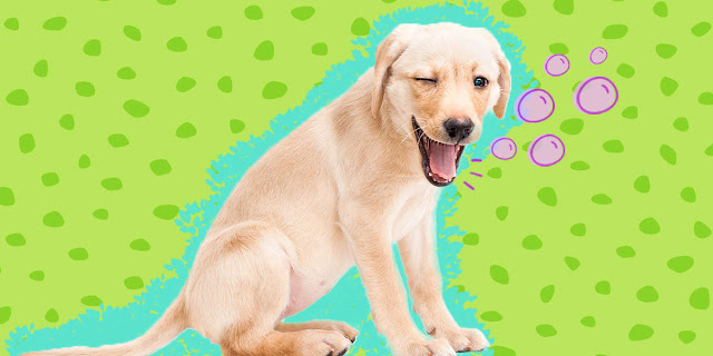 Why Does My Dog Have Hiccups?: Causes and Solutions