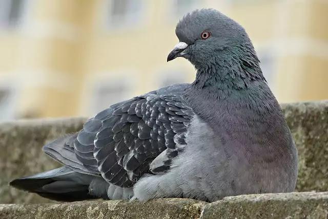 Bird Flu, Bird Flu Virus, Bird Flu Symptoms