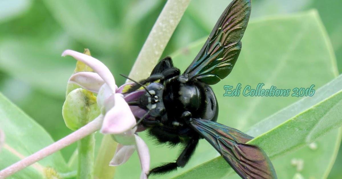 DAPUR Karya Ilmiah Remaja: Kumbang dan Bunga