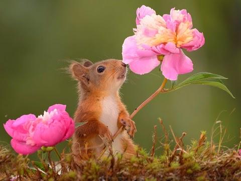 Sóc Nâu Và Hoa